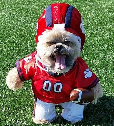 Cute Shih Tzu Costumes